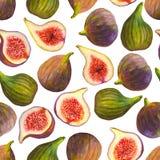 Os figos sem emenda do teste padrão da aquarela frutificam no fundo branco ilustração stock
