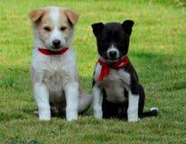 Os filhotes de cachorro? Imagens de Stock