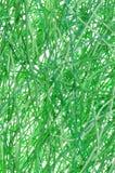Fios verdes foto de stock