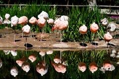 Reflexão do flamingo Foto de Stock