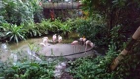 os flamingos tomam um resto Fotografia de Stock
