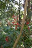 Os flowes bonitos no jardim foto de stock royalty free