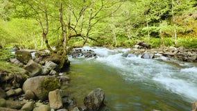 Os fluxos de córrego do rio jejuam na floresta verde bonita sem tocar, timelapse da natureza vídeos de arquivo