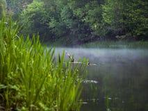 Os fluxos de tor??o do rio entre ?rvores na floresta fotografia de stock
