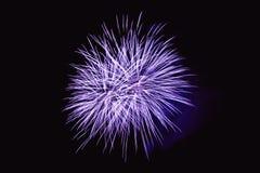 Os fogos-de-artifício abstraem no fundo escuro Imagens de Stock