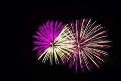 Os fogos-de-artifício cor-de-rosa e brancos iluminam acima o céu Imagem de Stock