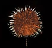 Os fogos-de-artifício da fantasia iluminam acima a noite sul de Florida Foto de Stock