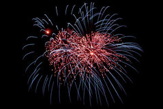 Os fogos-de-artifício indicam no fundo escuro do céu Foto de Stock