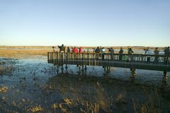 Os fotógrafo da natureza e do pássaro fotografam pássaros no nascer do sol da plataforma no lago na reserva natural de Bosque del Imagens de Stock