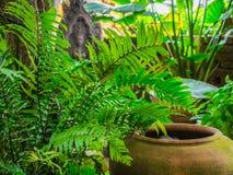 Os frascos velhos com a decoração verde do plantl no jardim Fotografia de Stock Royalty Free