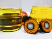 Os frutos da palma e o óleo de palma, um fruto são cortados para mostrar seu núcleo Imagens de Stock