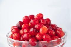 Os frutos saudáveis, Gema-qualidade frutificam, Columbia Britânica, Canadá, arandos, bagas vermelhas, foto de stock