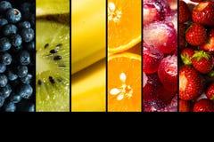 Os frutos sazonais representaram dentro de lado a lado no fundo preto com o espaço da cópia fotografia de stock