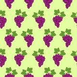 Os frutos sem emenda vector o teste padrão, o fundo brilhante da cor com uvas e as folhas, sobre a luz - contexto verde Foto de Stock Royalty Free