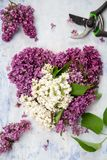 Os fundos da mola, lilás coração-dado forma, jardim scissors Imagem de Stock Royalty Free