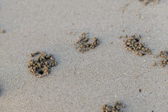 Os furos do caranguejo na praia Fotos de Stock