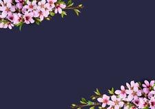 Os galhos da mola do pêssego florescem e as folhas adiantadas no canto arranjam fotografia de stock