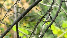 Os galhos de um Linden desencapado balançam lentamente em um parque pitoresco no outono vídeos de arquivo