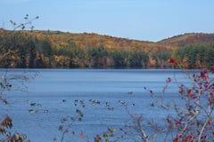 Os gansos de Canadá descansam no reservatório com folhagem de outono em Connecticut fotografia de stock