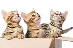 Os gatinhos sentam-se em uma caixa de cartão Imagens de Stock