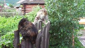 Os gatos comunicam-se na natureza no jardim na cerca vídeos de arquivo