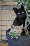 Os gatos curiosos Foto de Stock Royalty Free