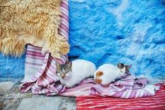 Os gatos dispersos bonitos dormem e andam nas ruas de Marrocos B Imagem de Stock