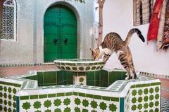 Os gatos dispersos bonitos dormem e andam nas ruas de Marrocos B Foto de Stock Royalty Free