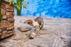 Os gatos dispersos bonitos dormem e andam nas ruas de Marrocos B Imagem de Stock Royalty Free