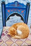 Os gatos dispersos bonitos dormem e andam nas ruas de Marrocos B Fotos de Stock