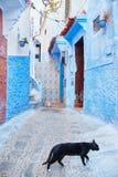 Os gatos dispersos bonitos dormem e andam nas ruas de Marrocos B Fotografia de Stock