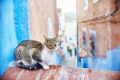 Os gatos dispersos bonitos dormem e andam nas ruas de Marrocos B Foto de Stock