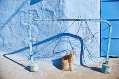 Os gatos dispersos bonitos dormem e andam nas ruas de Marrocos B Fotografia de Stock Royalty Free