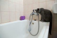 Os gatos domésticos são grandes animais de estimação a afagar e abraçar Imagens de Stock Royalty Free