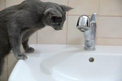 Os gatos domésticos são grandes animais de estimação a afagar e abraçar Fotos de Stock Royalty Free