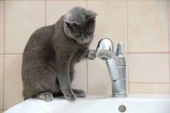 Os gatos domésticos são grandes animais de estimação a afagar e abraçar Foto de Stock Royalty Free
