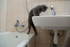 Os gatos domésticos são grandes animais de estimação a afagar e abraçar Imagens de Stock