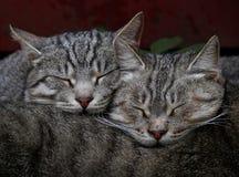 Os gatos dormem perfeitamente ilustração royalty free