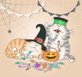 Os gatos engraçados comem doces do Dia das Bruxas Foto de Stock Royalty Free