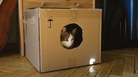Os gatos jogam com o raio de sol do espelho em uma caixa de cartão, dois animais de estimação jogam em casa vídeos de arquivo