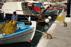 Os gatos que olham pescadores corrigem a rede de pesca Imagens de Stock