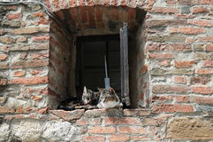 Os gatos relaxam dentro Foto de Stock Royalty Free