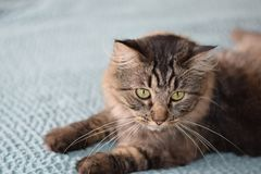 Os gatos são seus melhores amigos Fotos de Stock Royalty Free