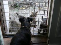 Os gatos vieram visitar o cão fotos de stock
