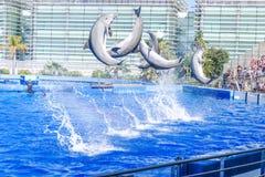 Os golfinhos que saltam na frente da audiência enorme imagem de stock royalty free