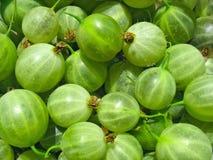 Os gooseberries verdes fecham-se acima, fundo da baga fotografia de stock royalty free