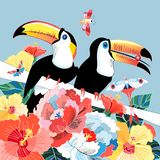 Os gráficos colorem tucanos engraçados dos pássaros Foto de Stock Royalty Free