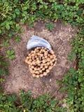 Os grânulos de madeira do rosário de Tulasi encontram-se em um fundo da rocha na grama verde Japa Mala mantra 108 grânulos imagens de stock royalty free