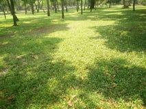 Os gramados verdes caem fotografia de stock