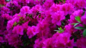 Os grandes arbustos da flor crescem no conservatório video estoque
